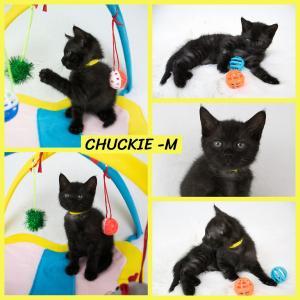 Chuckie FB 0620-XL.jpg