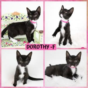 Dorothy FB 0620-XL.jpg