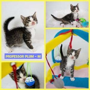 Professor Plum FB 0620-XL.jpg