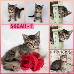 Sugar FB 0620-XL.jpg