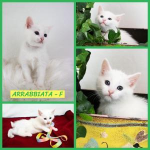 Arrabbiata FB 0620-XL.jpg