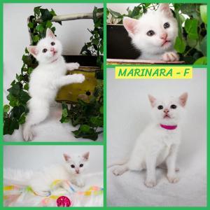 Marinara FB2 0620-XL.jpg
