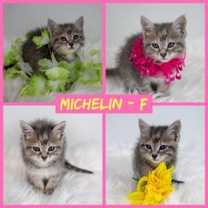 Michelin FB 0720-XL.jpg