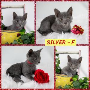 Silver FB 0720-XL.jpg
