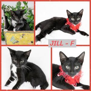 Jill FB 0820-XL.jpg