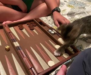 Ginger backgammon 2.jpeg